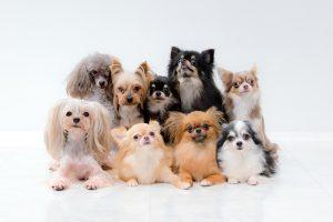 診療対象:犬
