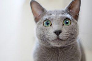 診療対象:猫